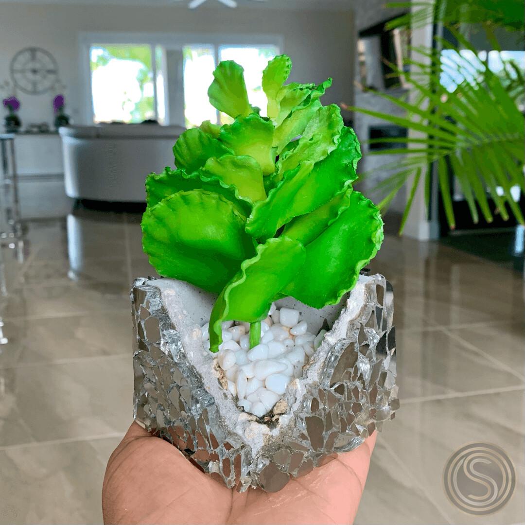 Mirror-Mirror Planter