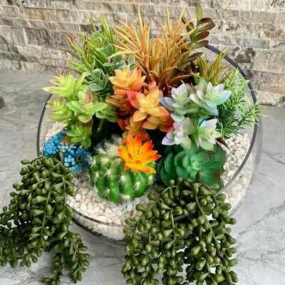 Open Concept Glass Succulent Farm