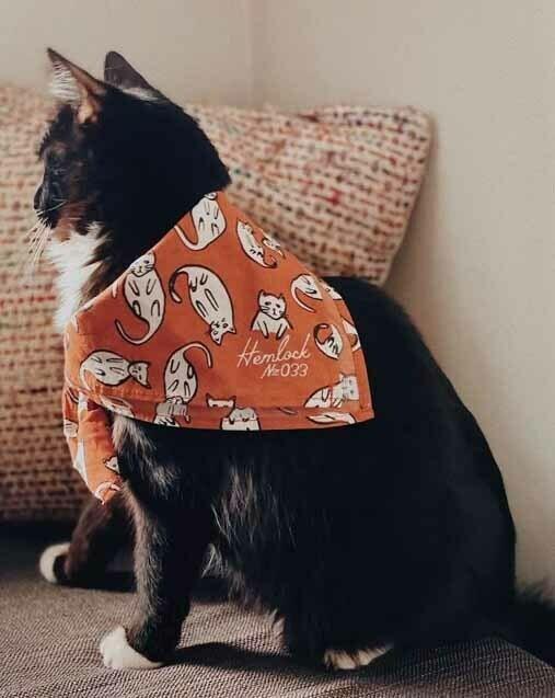 Kitties Bandana