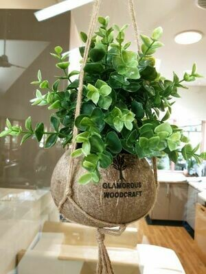 Coconut Shell- Plant Pot