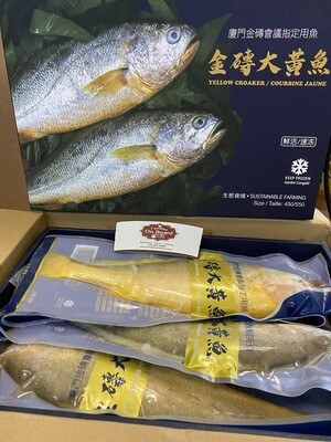 Yellow Croaker Fish 1 case 4 pc (2kg)/金砖大黄花鱼 (礼盒装,1盒4条2公斤)