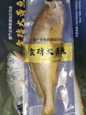 Yellow Croaker Fish 1pc / 金砖大黄花鱼 1条
