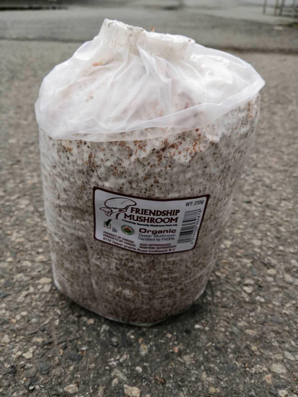 Organic Mushroom Kit / 有机蘑菇包