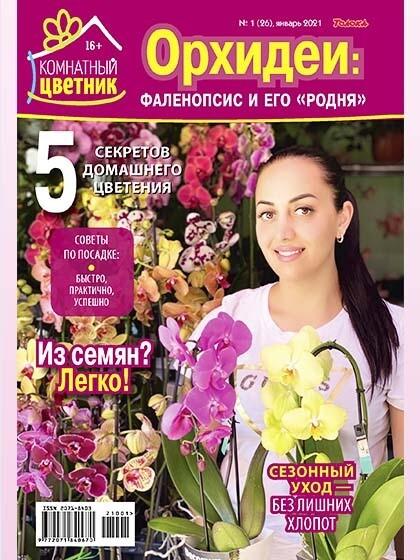 Орхидеи: Фаленопсис и его «родня» (Комнатный цветник, 2021/01)