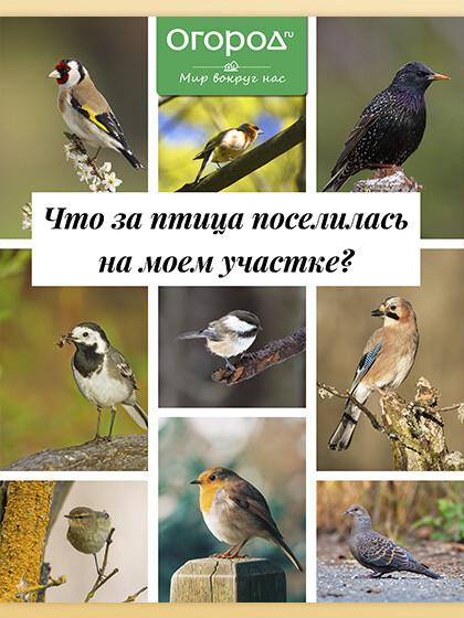 Птицы в саду - Гид. Огород.ru (Мир вокруг нас, № 1)