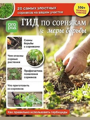 Гид по сорнякам. Огород.ru