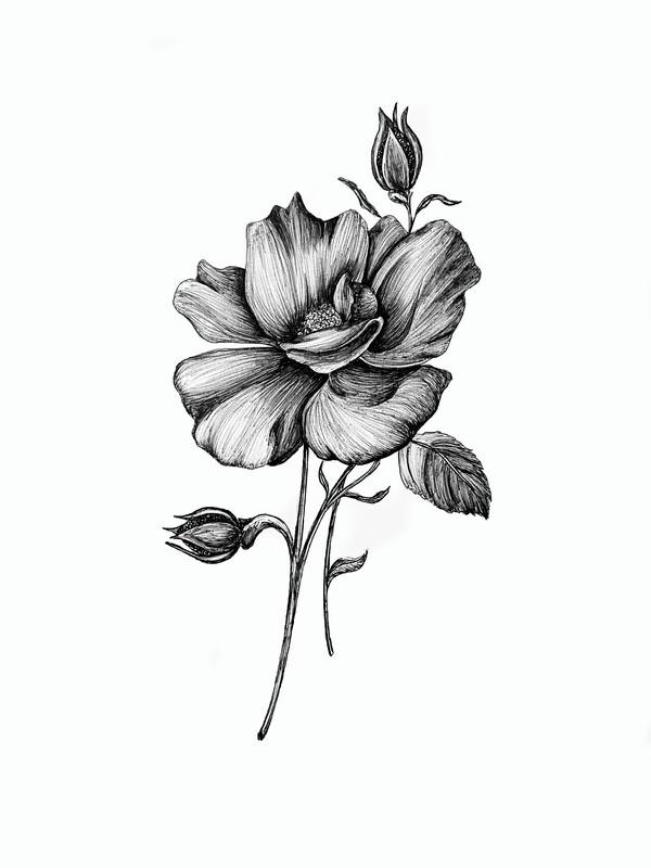 Magnolia Illustration Print
