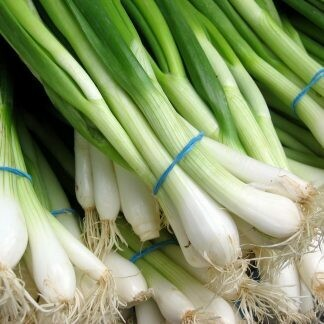 Bunch of Spring Onion