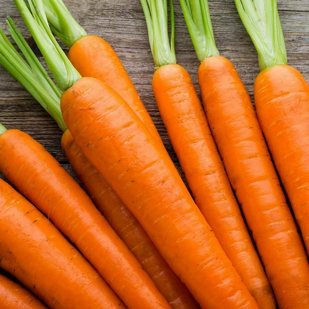 Bunch of Carrots Medium