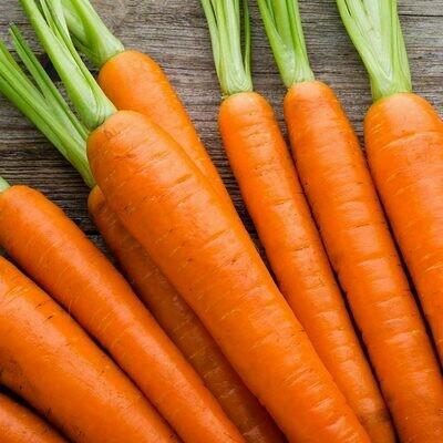 Bunch of Carrots Medium