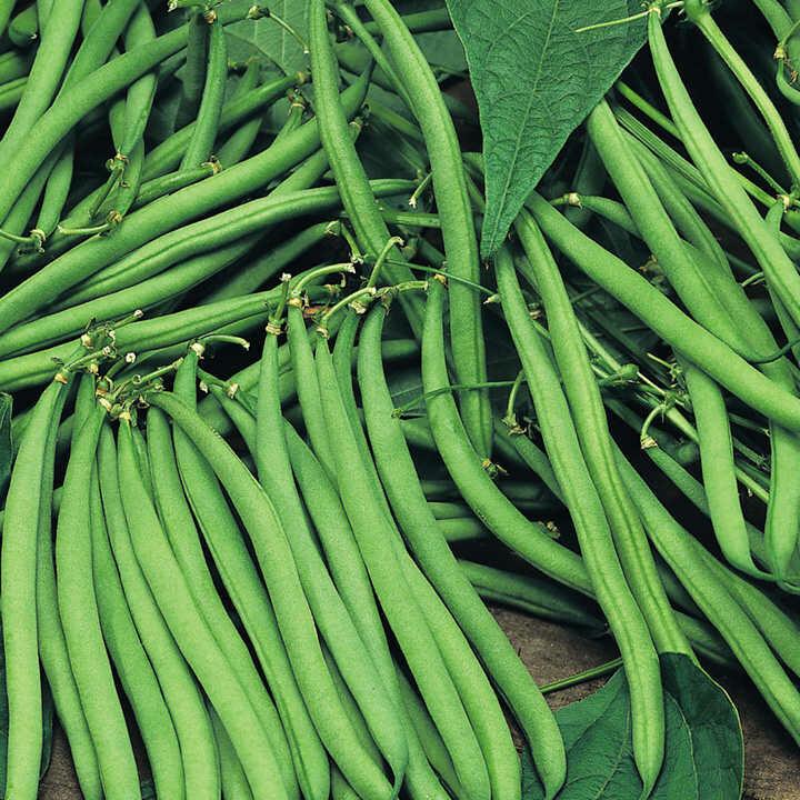 Fine Green Beans 150g