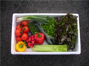 Regular Salad Box