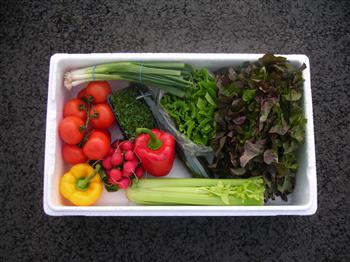 Regular Salad Box
