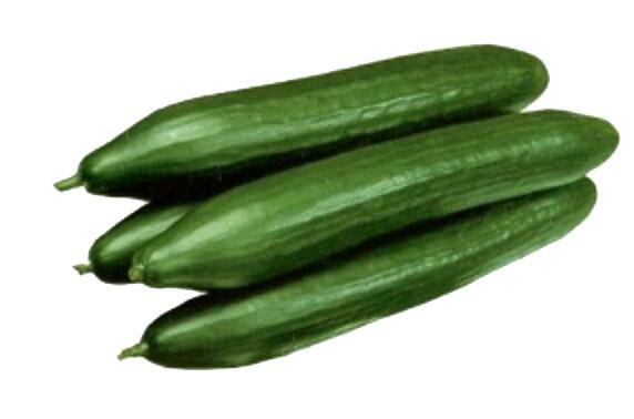 Concombre Vert (ut)