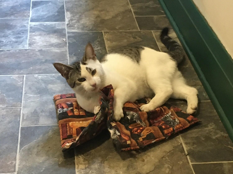 Mat Nip - Library Cats - Catnip infused Kitty play mat