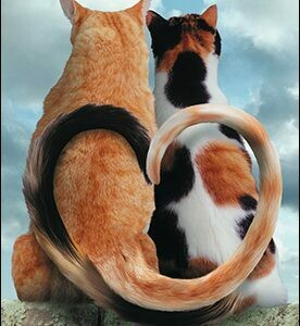 Anniversary - Two Cats Tails Forming a Heart