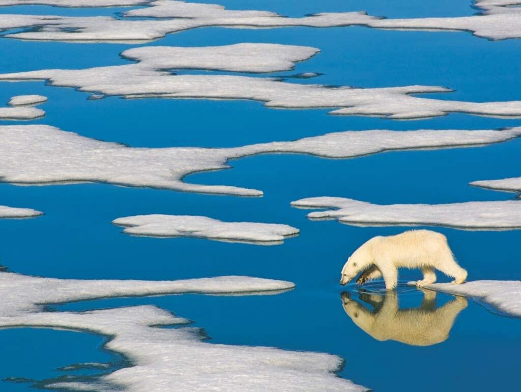 Polar Bear on Ice - 500 Piece National Geographic - New York Puzzle Company