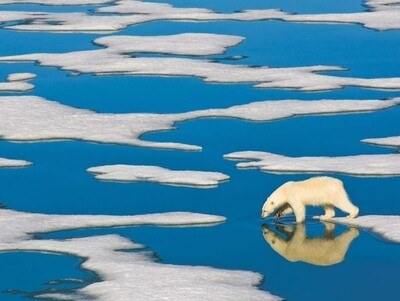 Polar Bear on Ice - 500 Piece National Geographic - New York Puzzle Company