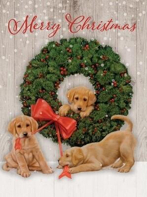 Lang Christmas Cards - Wonder and Joy - 18 per Box
