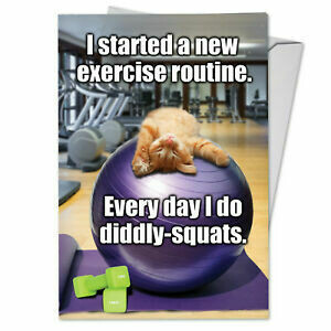 Birthday - Cat - diddly squats