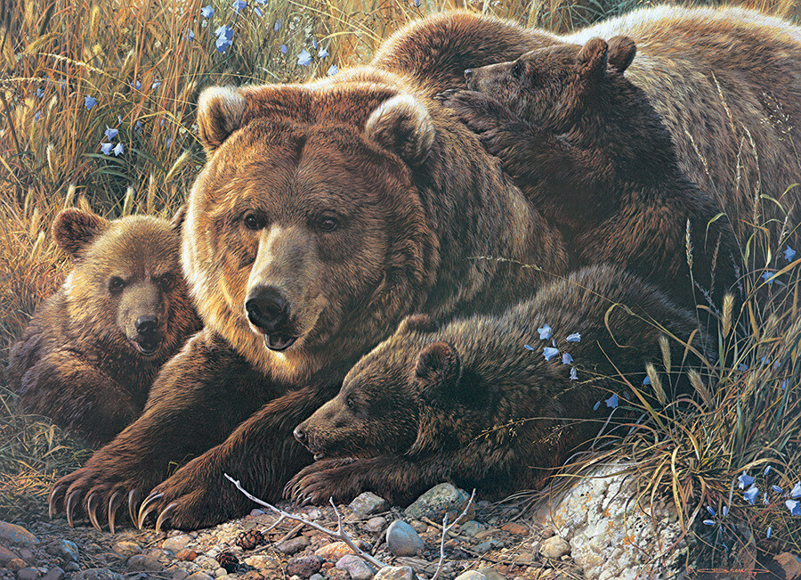 Grizzly Family - Family Pieces - 350 Piece Cobble Hill Puzzle