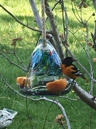 Kitras Art Glass - Dreams - Bird Feeder for Baltimore Orioles, Hummingbirds and others - Canadian Hand Blown Glass