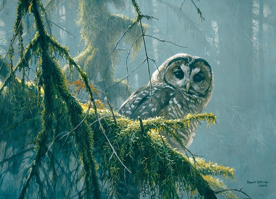 Mossy Branches - 500 Piece Cobble Hill Puzzle - Robert Bateman
