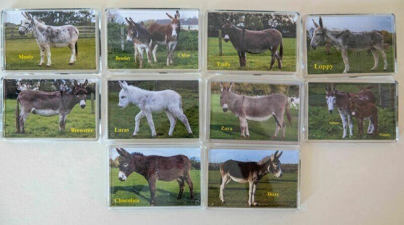 PHOTO FRIDGE MAGNET (Adoption donkeys)