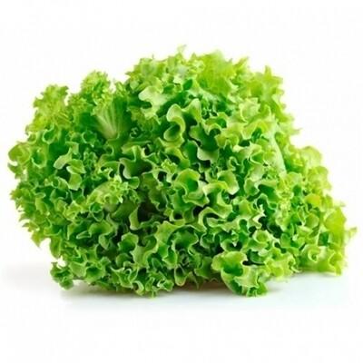 Lettuce Green Lollo  خس أخضر لولو (Piece) - Hydroponic