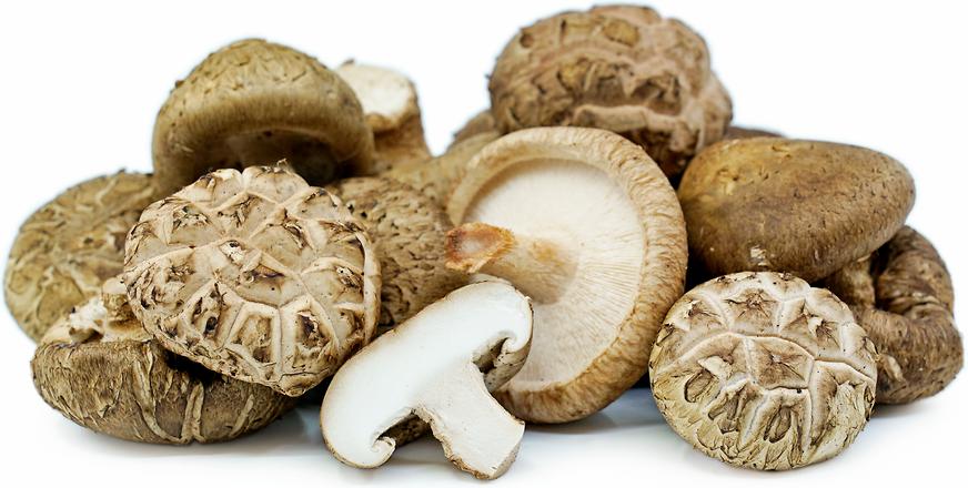 Shiitake Mushroom فطر شيتاكي (Box) - Franje