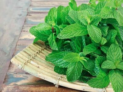 Mint نعناع (Bunch) - Our Selection