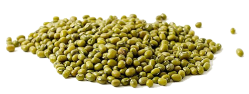 Green Beans Seeds فاصوليا عريضة (Bag) - Nature by Marc Beyrouthy