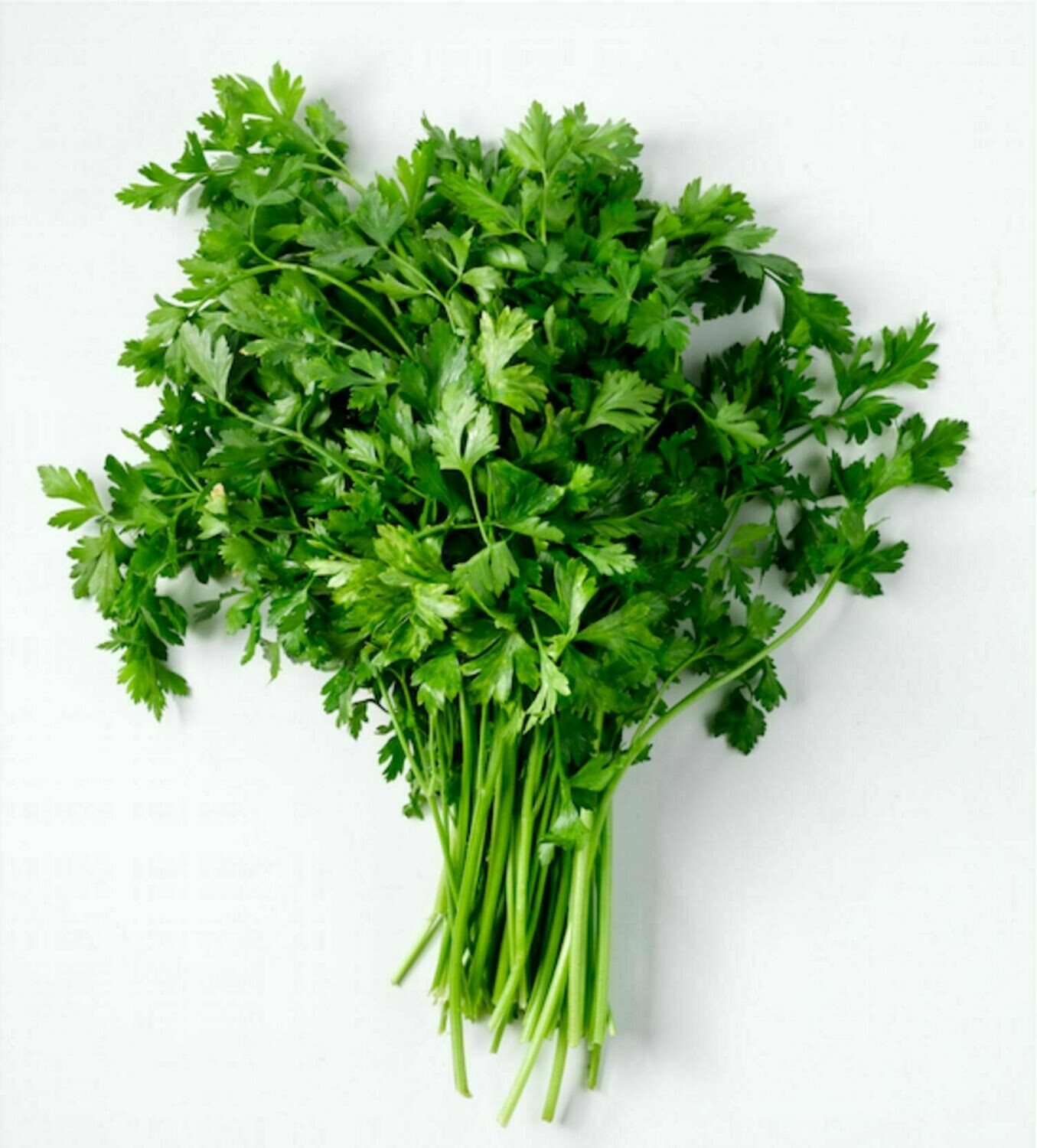 Parsley بقدونس (Bunch) - The Green Van Permaculture