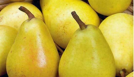 Pear Koshia إجاص كوشيا (Kg) - Our Selection