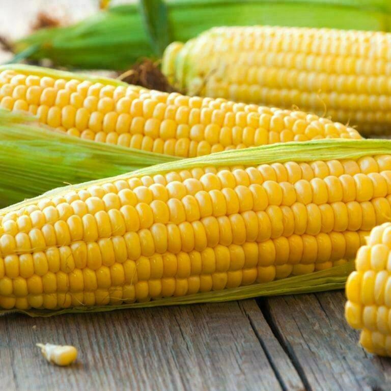 Corn Sweet ذره حلوه (Piece) - Our Selection