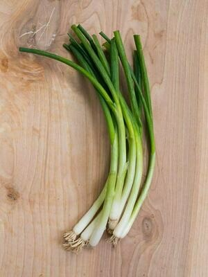 Onion Green Spring بصل ربيعي (Bunch) - Our Selection