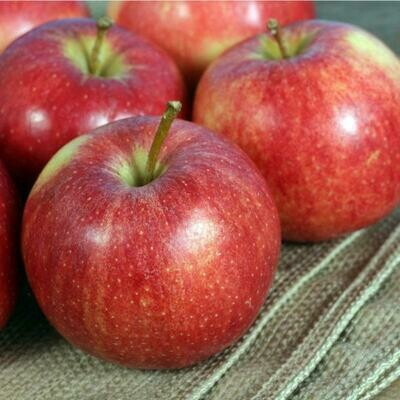 Apple Royal Gala تفاح (Kg) - Our Selection