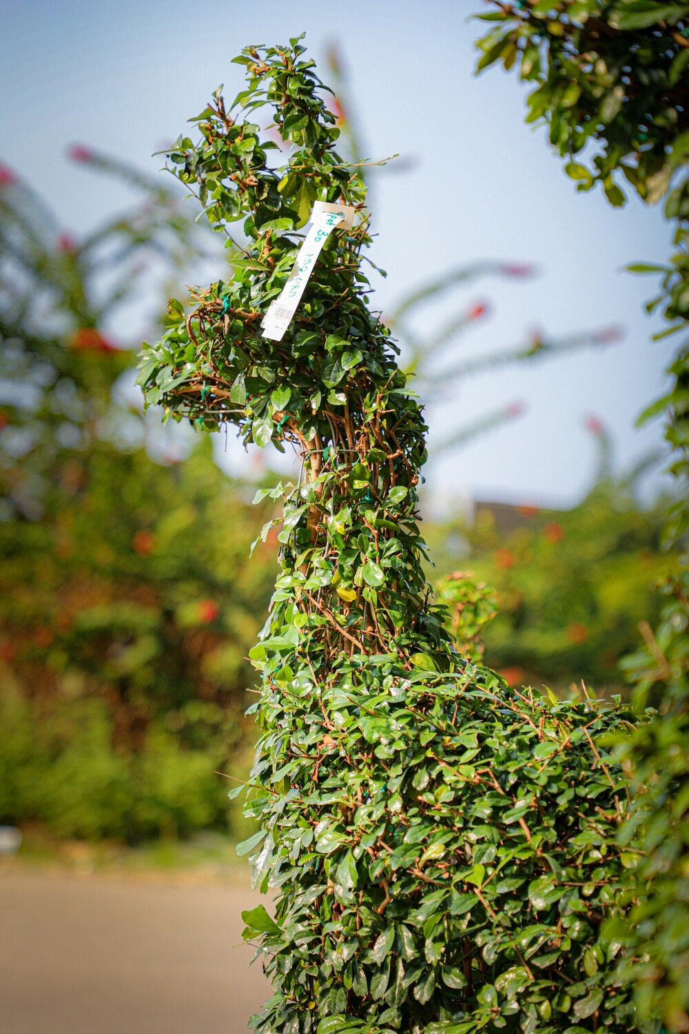 Topiary Reindeer Small (90$) - Nature by Marc Beyrouthy