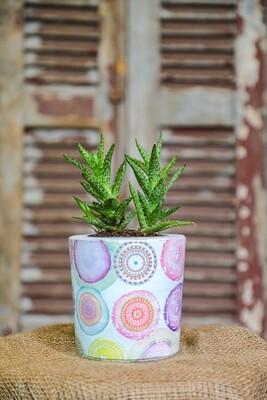 Concrete and Succulent Love (Piece) - Coup de Glue