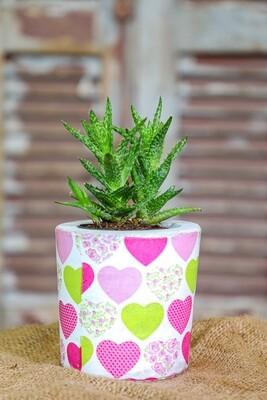 For the Love of Concrete and Succulent (Piece) - Coup de Glue