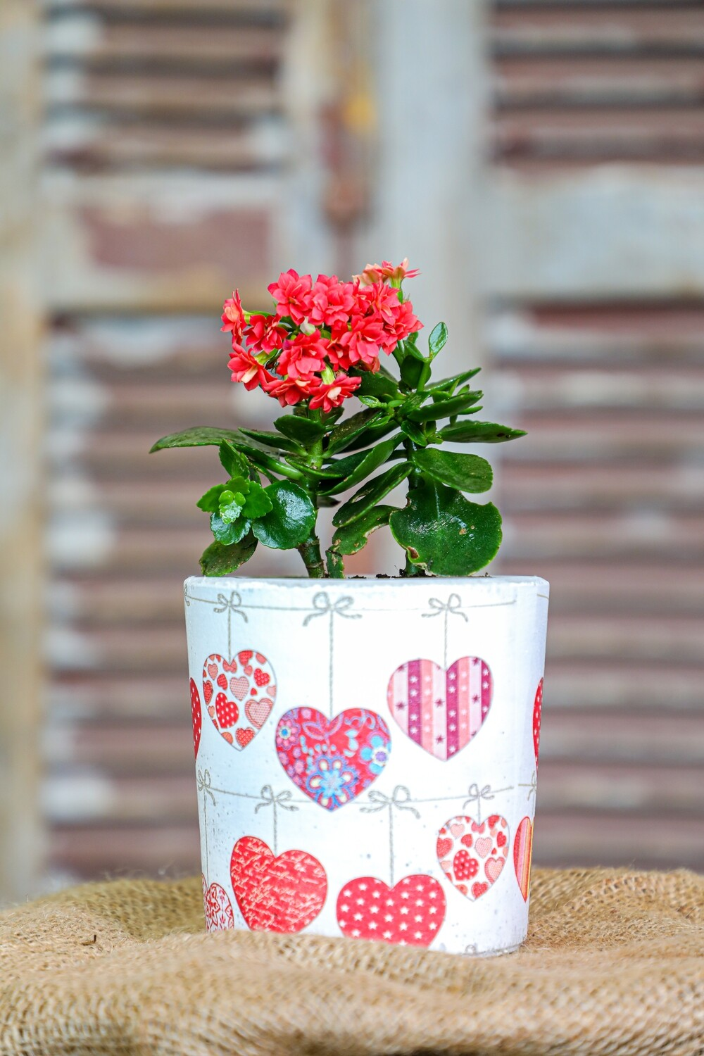 Concrete and Kalanchoe Love (Piece) - Coup de Glue
