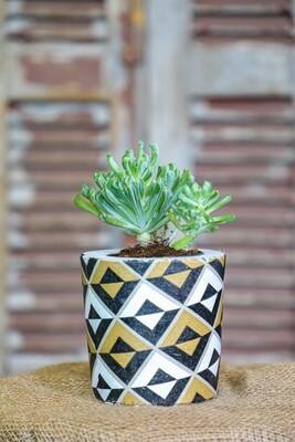 Concrete Meets Succulents (Piece) - Coup de Glue