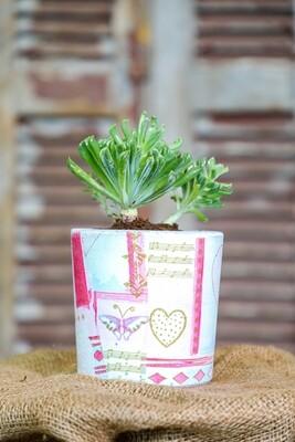 Lovely Concrete and Succulents (Piece) - Coup de Glue
