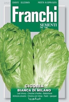 Chicory Bianca Di Milano (Bag) - Franchi Sementi