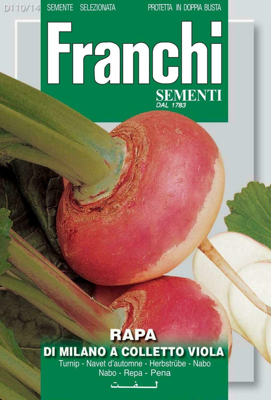 Turnip Tondo Colletto Viola (Brassica rapa L.) (Bag) - Franchi Sementi