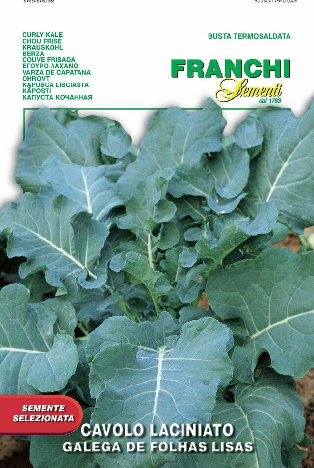 Kale Curly Smooth Green Leaf (Bag) - Franchi Sementi