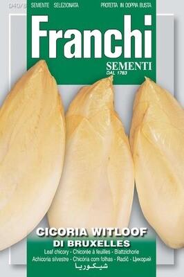 Chicory Witloof Belgian Endive (Bag) - Franchi Sementi