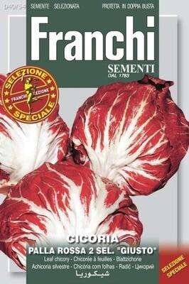 Chicory Leaf Palla Rossa Precoce (Bag) - Franchi Sementi