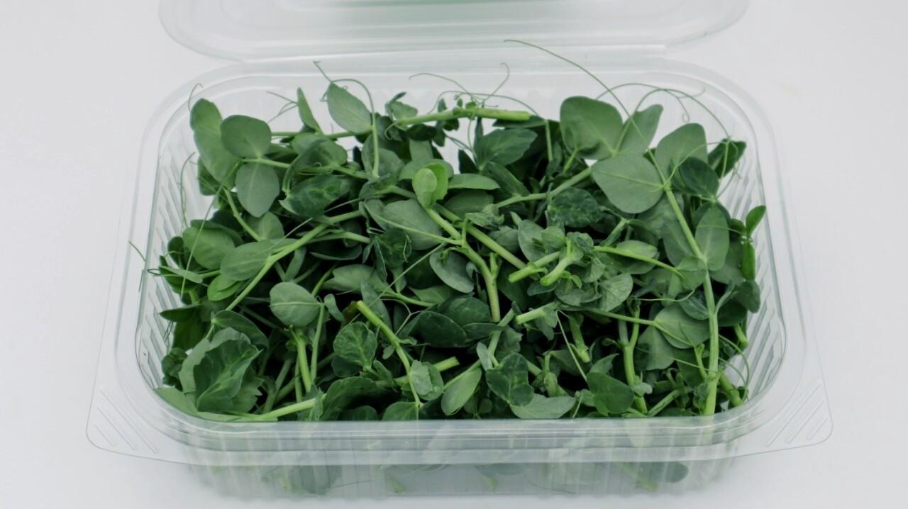 Microgreens Peas (Box) - Agreen Organics