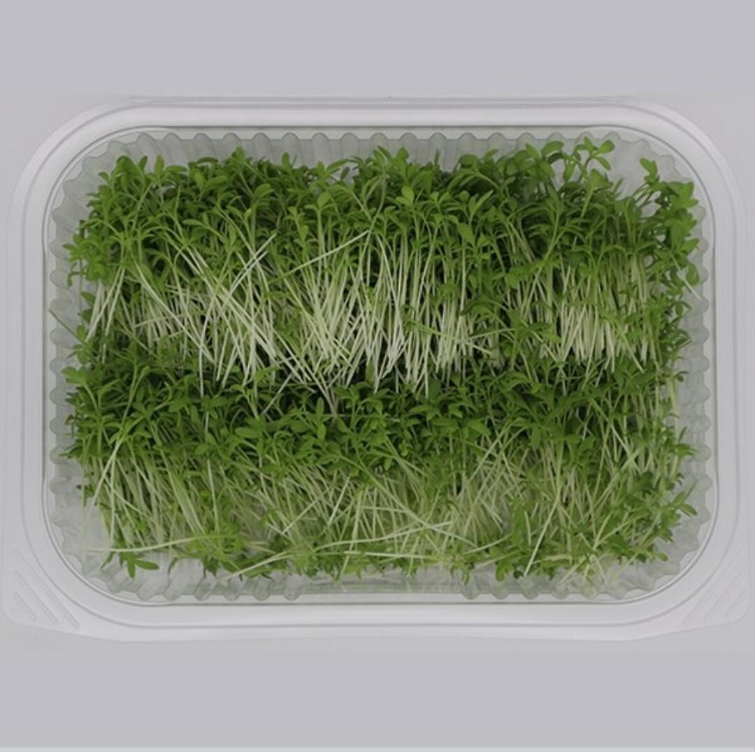 Microgreens Cress (Box) - Agreen Organics